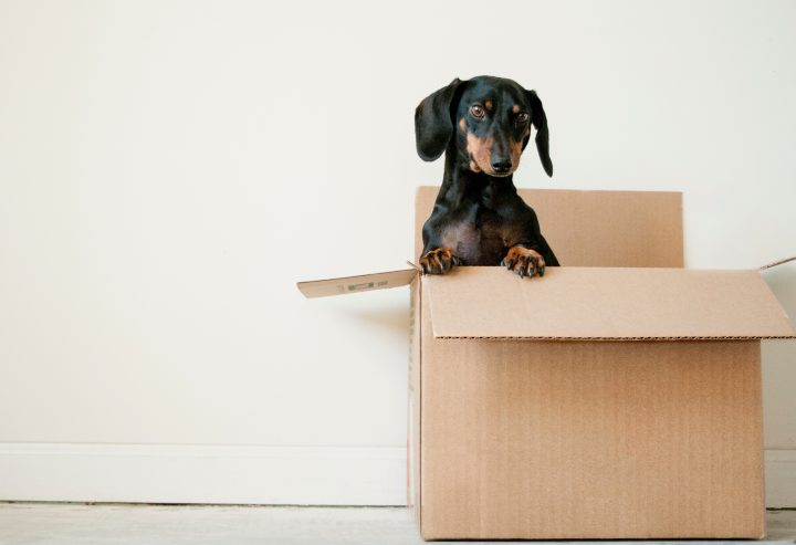 Top Things To Know About Moving Home